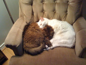 Cleo (tabby) and Blanco curled up